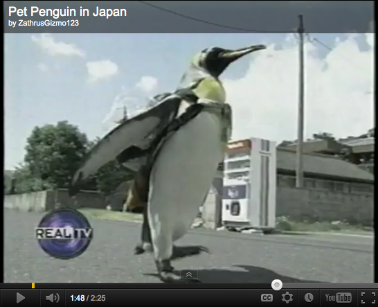 Pet Penguin Wears Backpack