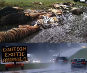 49 Exotic Animals Loose, Murdered in Ohio October 2011