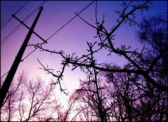 Garden in February Telephone Wires Color