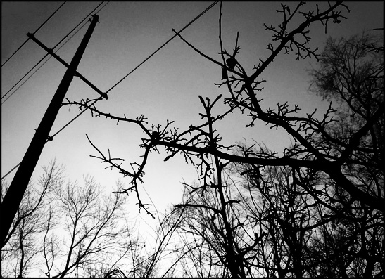 Garden in February Telephone Wires Black and white