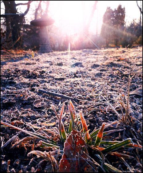 February Frost in garden