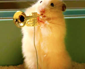 Hamster Jazz Band Video WTF Moment