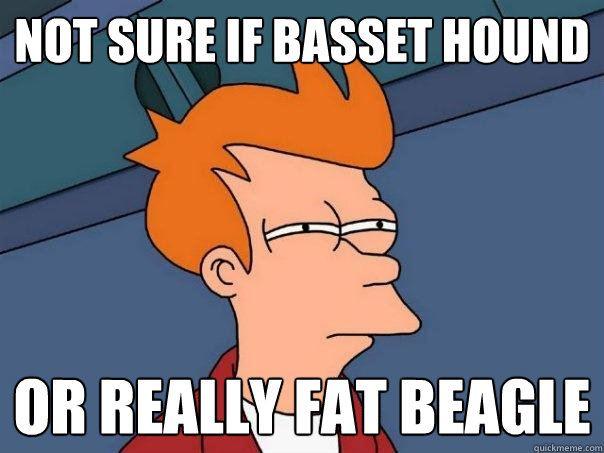 Basset Hound Meme