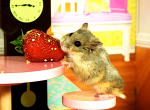 Cute Hamster Videos